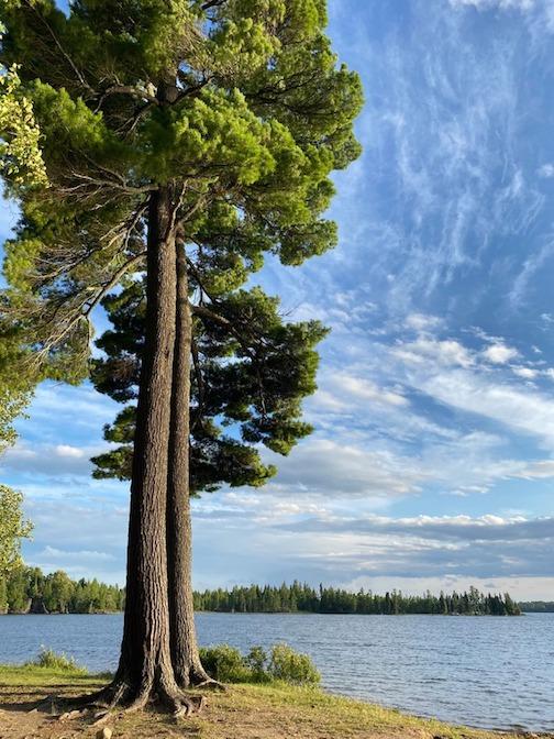 Bearhead Lake State Park by Jennifer Schulz.