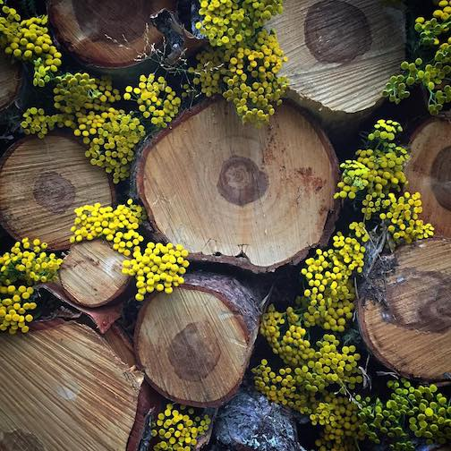 Decorating with Tansy by Kristofer Bowman.