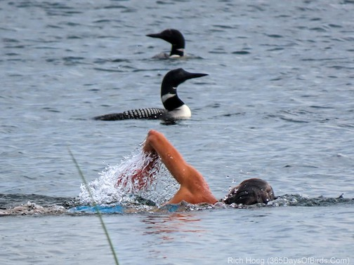Swimming with the Loons by Richard Hoeg.