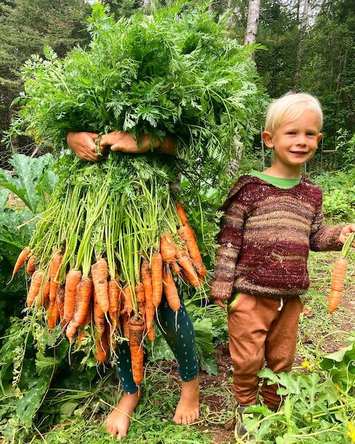 Best Harvest Photo of 2020? Amymarie Schmidt took this photo of her sons harvesting carrots. Her eldest, Arrow, is behind that carrot forest.