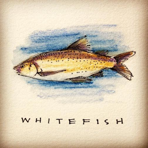 """""""Whitefish."""" By Betsy Bowen, part of the Apostle Island's Alphabet Project."""