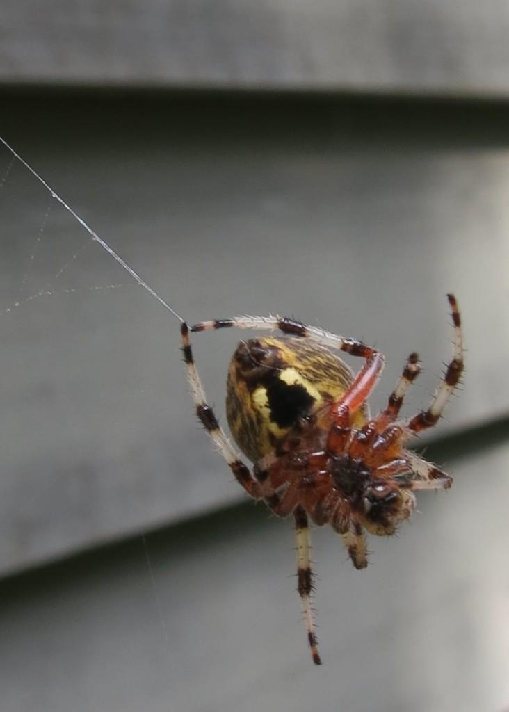 Spider by Betty Hemstad.