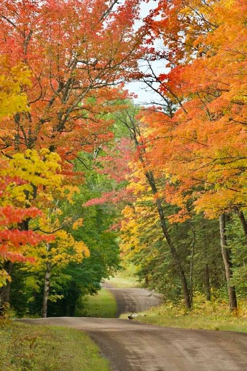 The colors are coming by David Johnson.