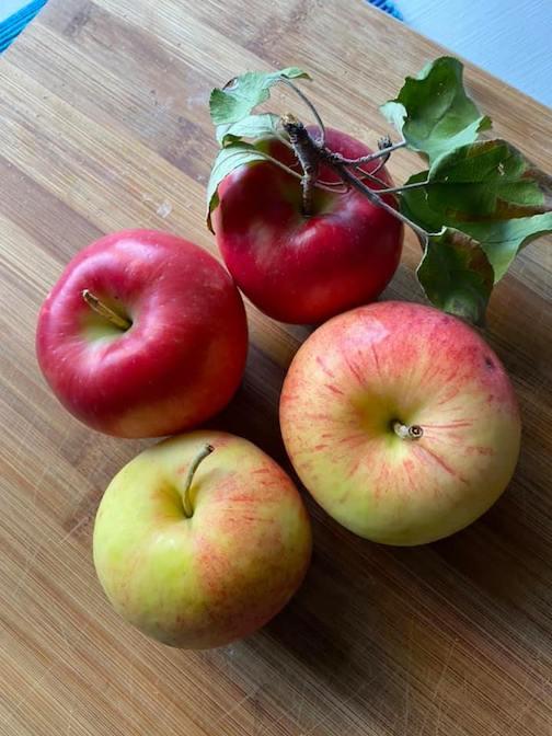 First harvest: Paula Reds and Honeycrisps.