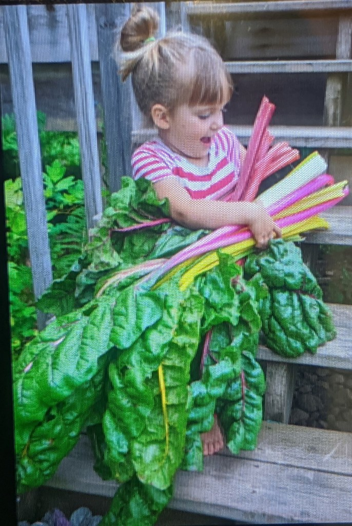 Chard Harvest by Monica Anderson.