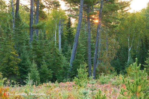Woods, calling for Moose by Paul Sundberg.