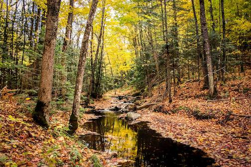 The woods in fall by Jonas Heinzerling,