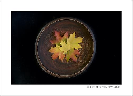 Bowl of Fall by Layne Kennedy.