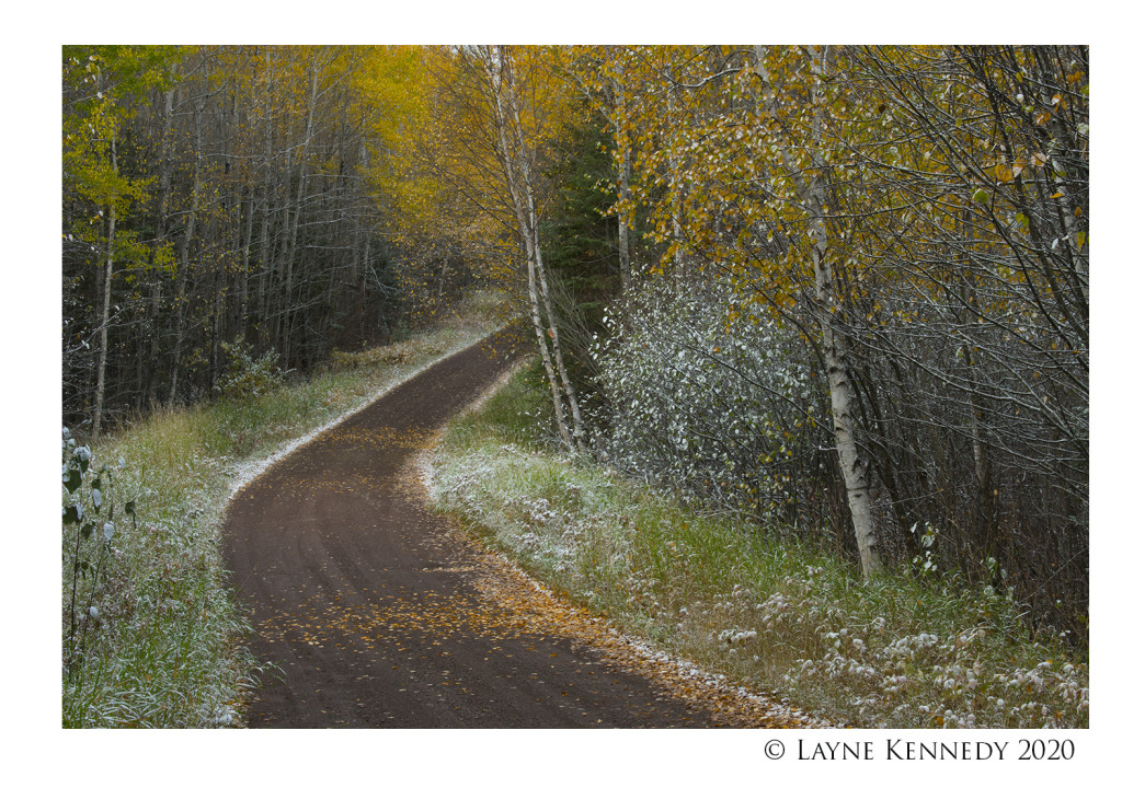 First Snow. Road to Elbow Lake. Photograph by Layne Kennedy.