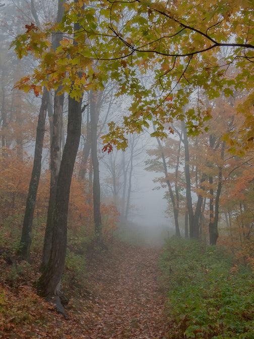 Foggy Woods by Mark Tessier.