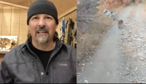 Casey Anderson explains what really was happening in the mountain lion video that went viral recently.
