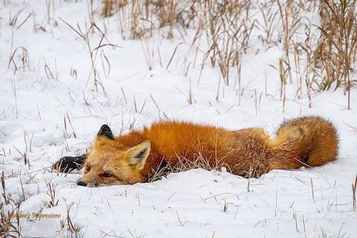 Nap time by Amber Nichols.