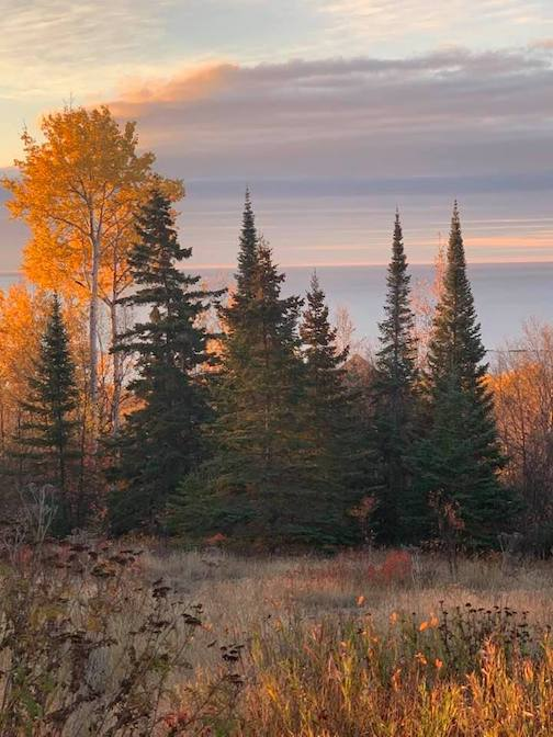 """Spruce and """"lollipops"""" by Jim Boyd."""