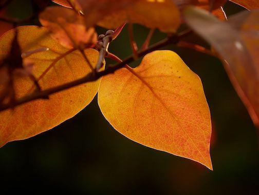 Leaves by Mark Tessier.