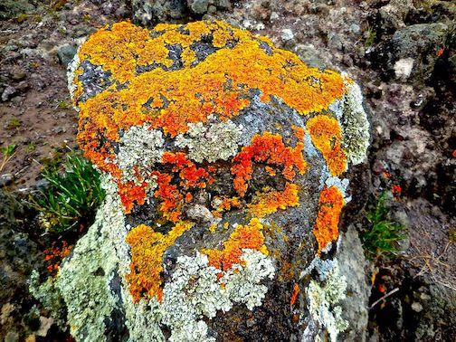 Wolf Ridge naturalist Joe Walewski  will present a free webinar on Lichens of the North Shore at 7 p.m. Oct. 29 through North House Folk School. To register, click here.