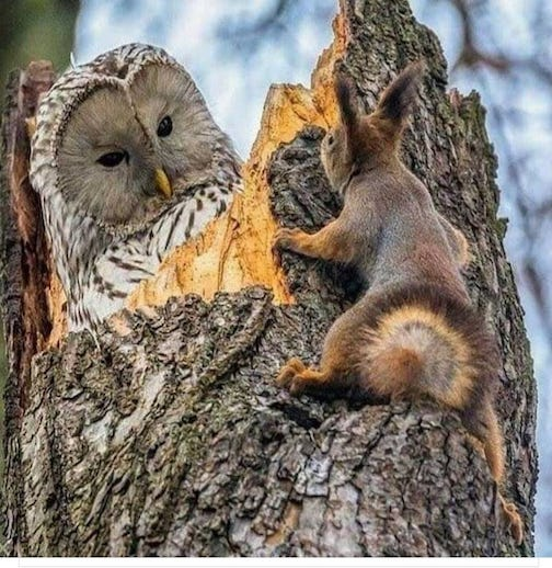 The owl and the squired. Photographer unknown.