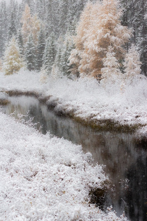 One year ago today (Oct. 14) we were waking up to snow by Thomas Spence.