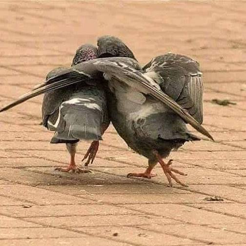 Two Birds. Photographer unknown.