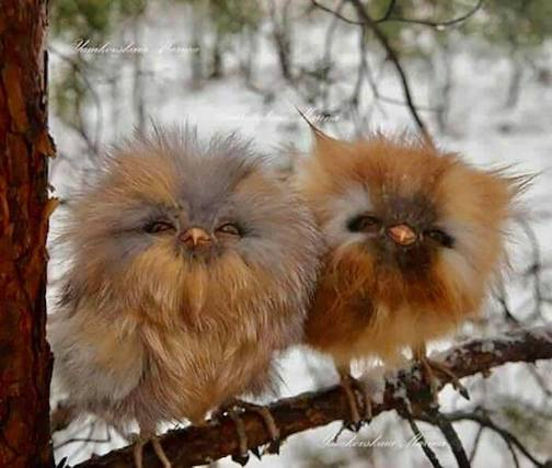 Two cuties. Baby owls. Photographer unknown.