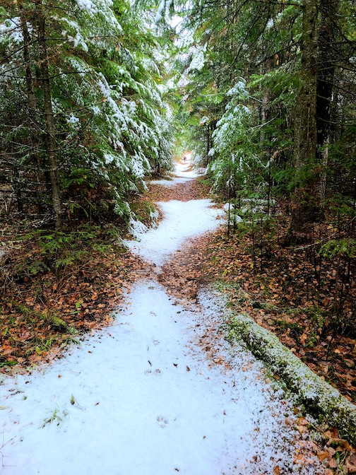 Forest path in early winter by Jay Arrowsmith DeCoux.