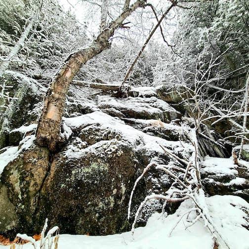 Wilderness by Jay Arrowsmith DeCoux.