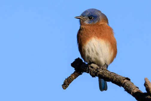 Bluebird by Thomas Demma.