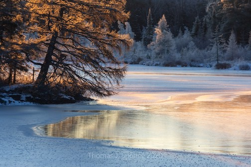 Hoar-frost Tamarack, early ice and sunrise at -8F this morning by Thomas Spence.