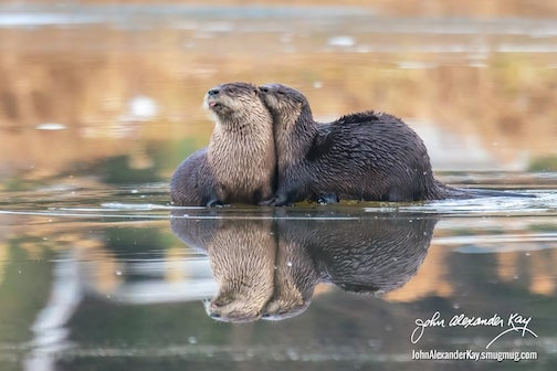 An otters' life by Alexander Kay.