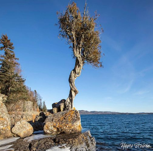 Just imagine the people and stories that this tree has witnessed ... by Hayes Scriven.
