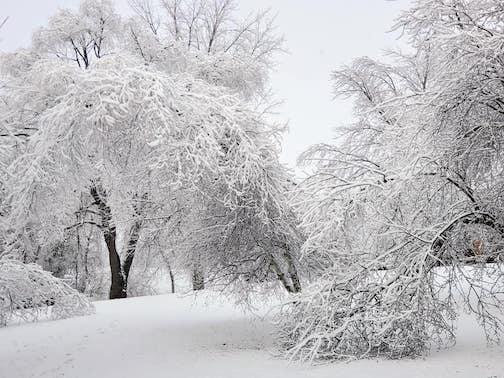 Hoar frost landscape by Carol Siebenmakr-Miller.