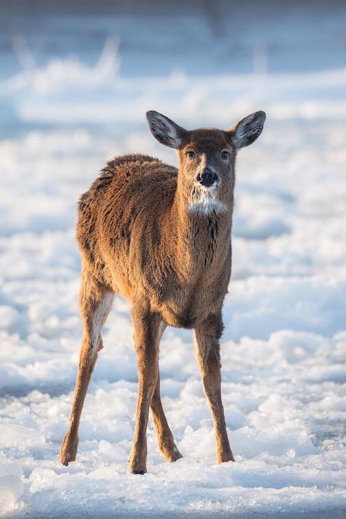John Keefover caught this close-up of the deer in the harbor.