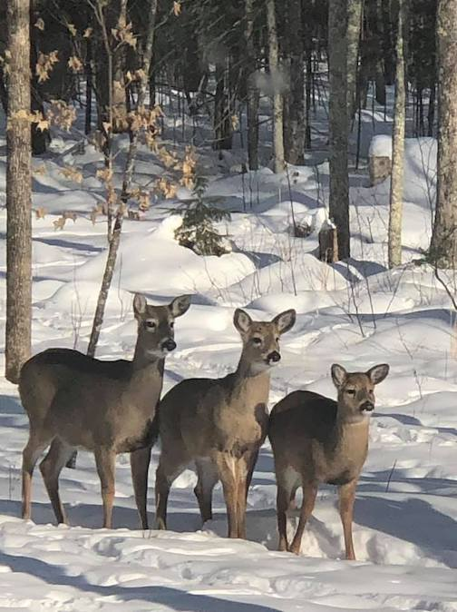 They are watching my husband fill the bird feeders and hoping he spills some seeds by Jeri Schubitzke.