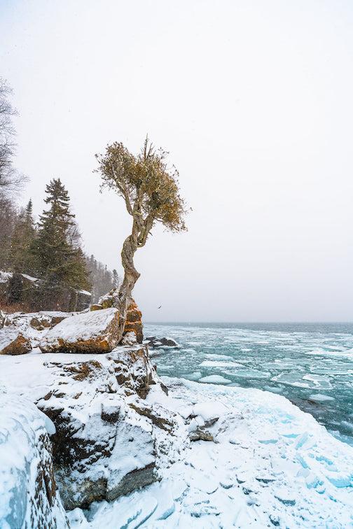 Little Cdar Spirit Tree (Manidoo-gizhikens) by Nathan Klok.