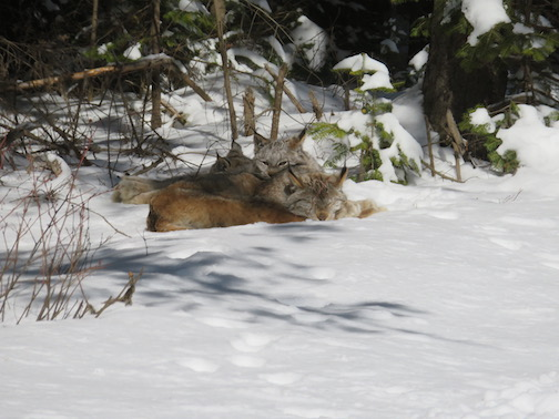 Naptime in the Superior National Forest by David Grosseheusch.