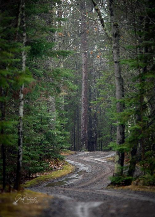 Just a dirt road and some trees, somewhere in NW Wis., by Jamie Rabold.