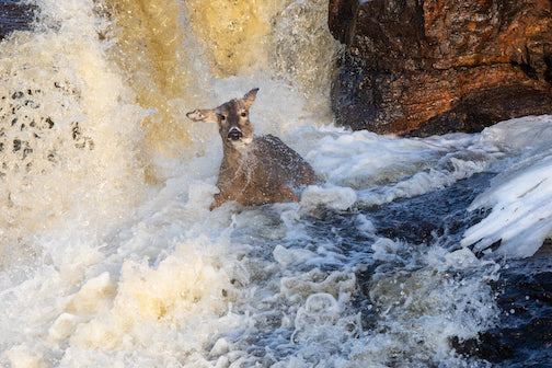 Doe swept downstream.