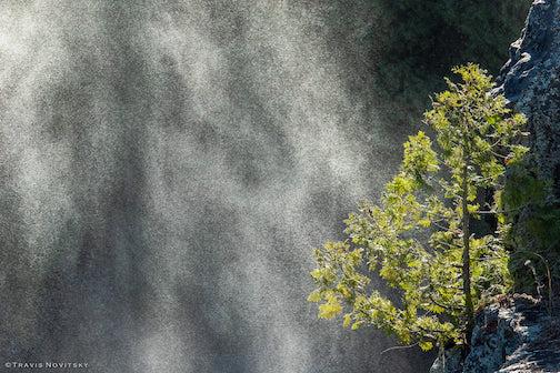 Waterfall mist and cedar by Travis Novitsky.