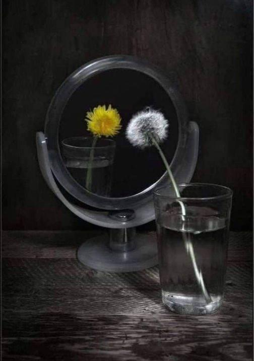 Dandelion in Mirror, photographer unknown.