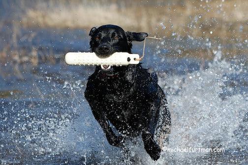 Scout ..  The Fetch  by Michael Furtman.