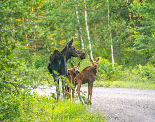 Early morning with mom and her little ones by David Johnson.