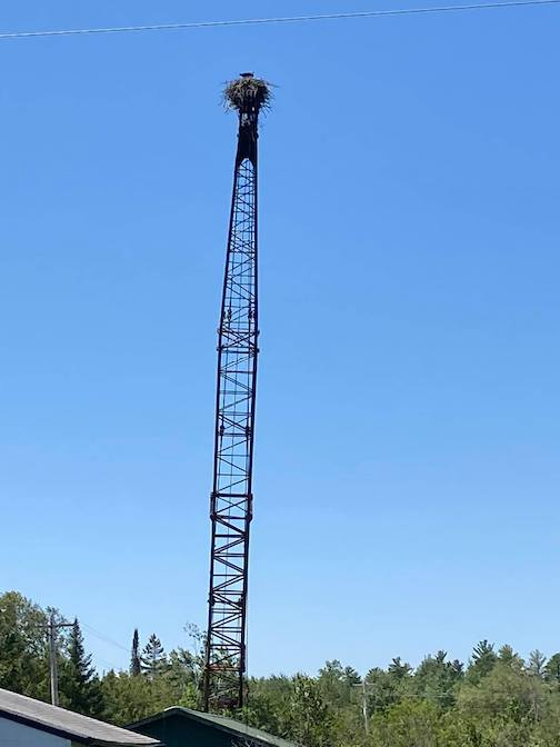 An eagles nest on a crane just north of Duluth by Honey Halverson.