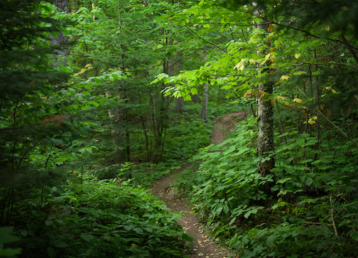 The woods in summer by Mark Tessier.