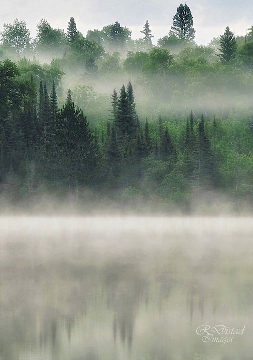 A little misty in the forest by Roxanne Distad.