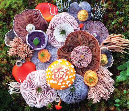 Vibrant Mushroom Arrangements Photographed by Jill Bliss. To read about her work and see more photographs, click here.