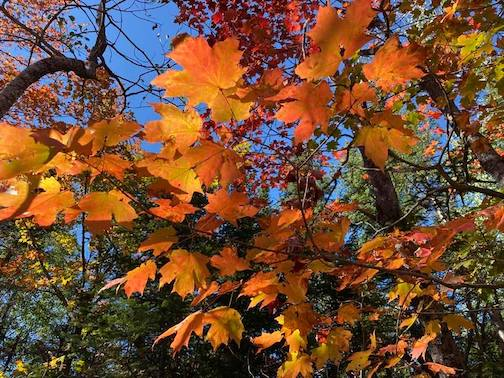 Fall by Ann Swallow Gillis.