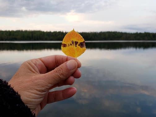 Avant-garde leaf by Annie Possis.