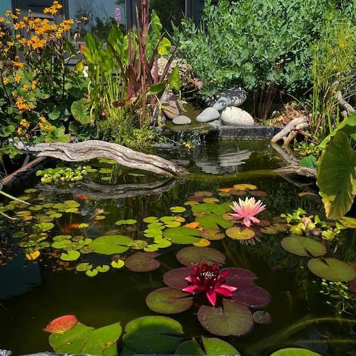 The back garden by Kristofer Bowman.