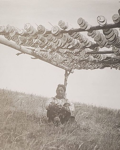 Drying squash slices. Hidatsa woman. Photographed in 1916. Photographer unknown.