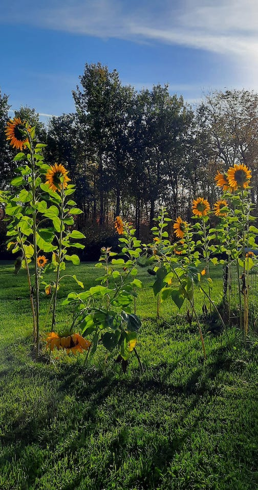 The sunflower ring was a big success by Cathy Quinn.
