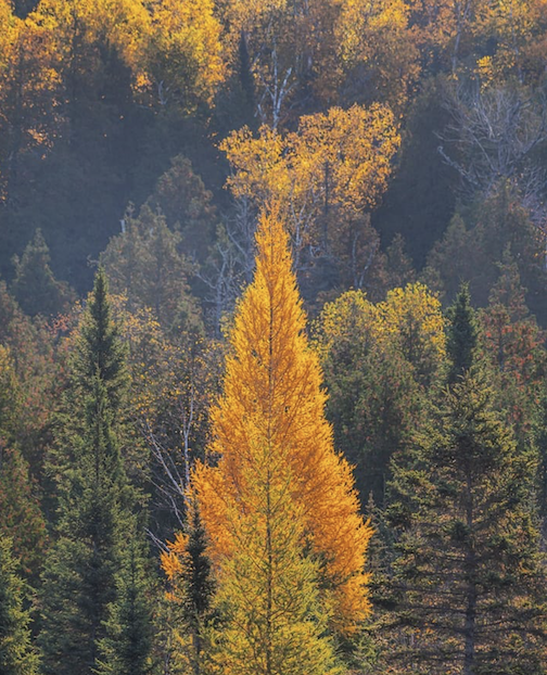 My favorite stage of all overs -- the Tamarack stage by Christian Dalbec.